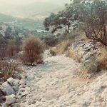 Palestine : effacer et renommer. Soixante-douze ans d'une entreprise coloniale de remplacement
