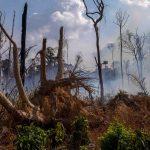Pourquoi l'Amazonie brûle-t-elle?