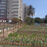 La Havane et ses <em>organoponicos</em>
