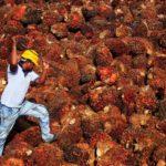 Cultures et élevage en monoculture : impasses productives et impacts climatiques majeurs (II)