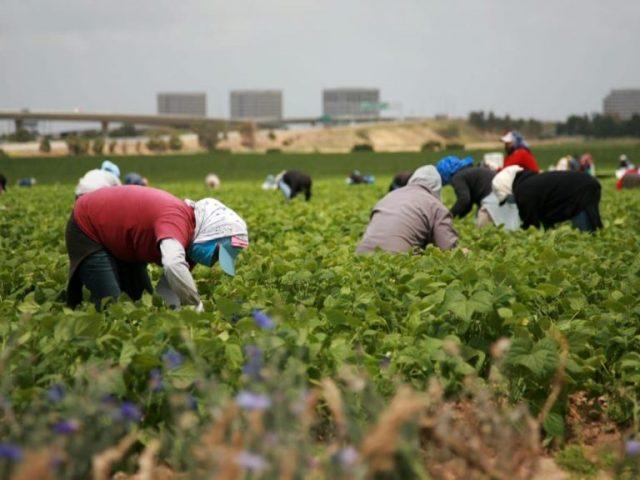 Etats-Unis. Le Covid-19 : une pandémie sociale pour les travailleurs agricoles